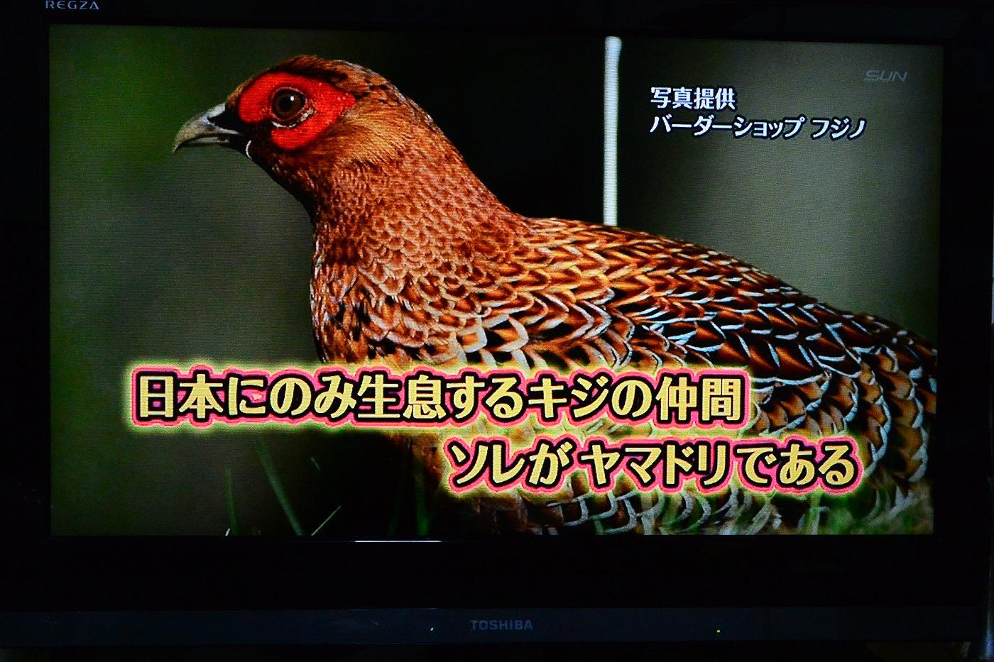 AFボーグ BORG90FLで撮影した野鳥・ヤマドリの写真画像